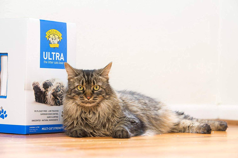 La mejor arena para gatos