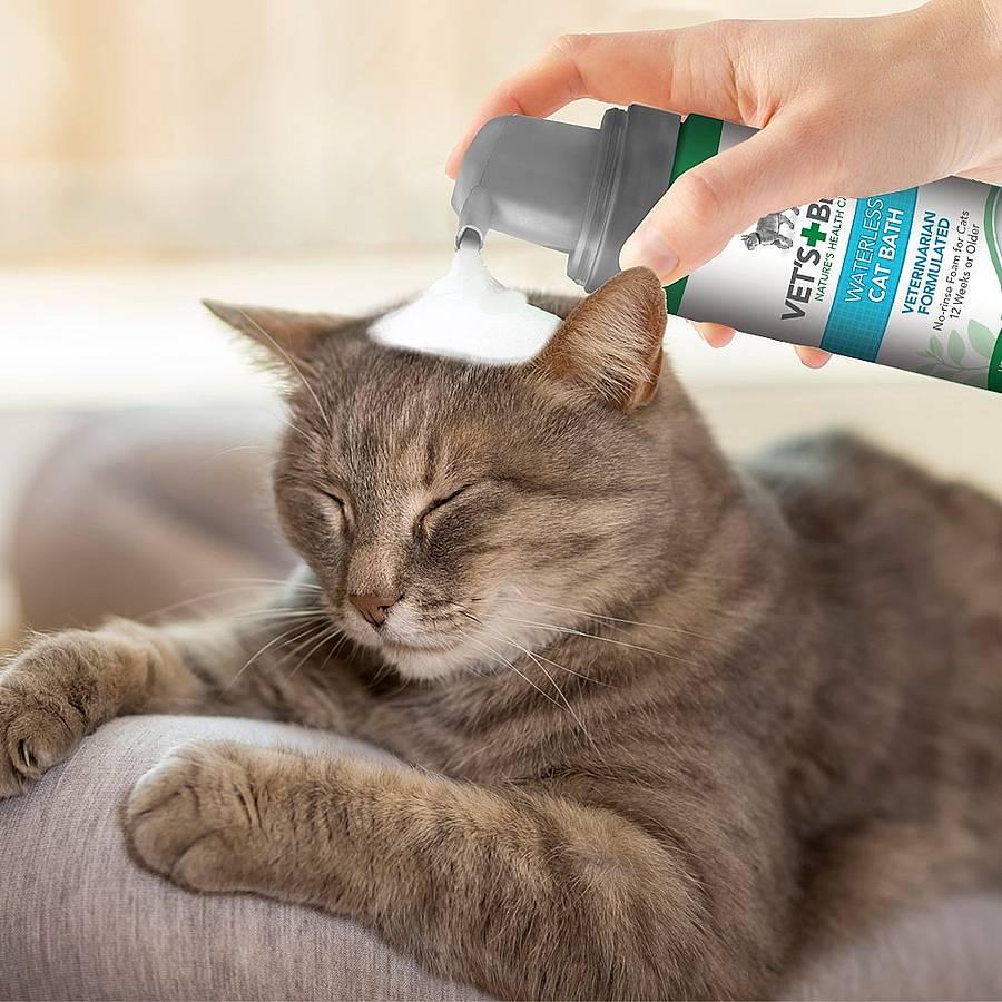 Champú para gatos, los mejores