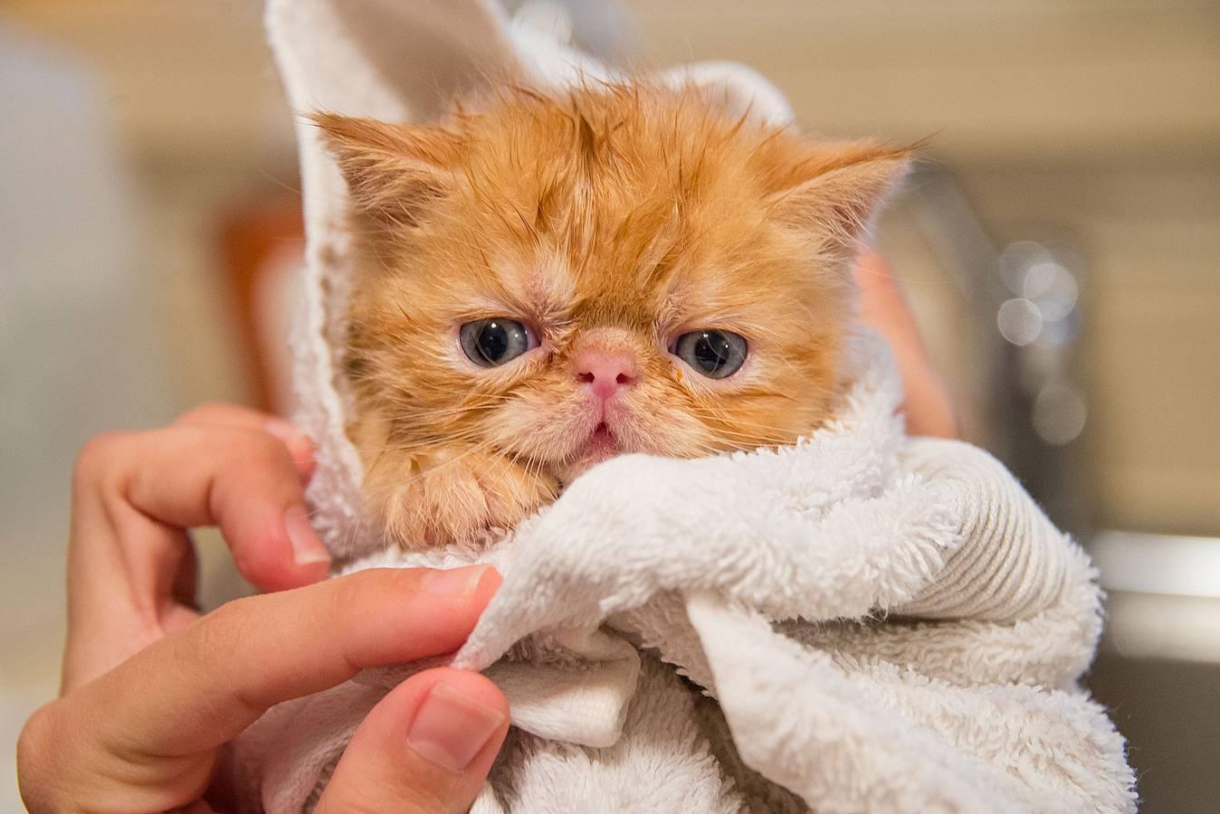 Mejor chumpú para gatos