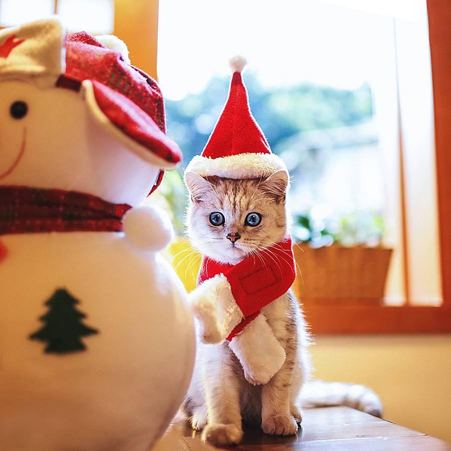 Mejores disfraces de Navidad para gatos [year] (análisis) 2
