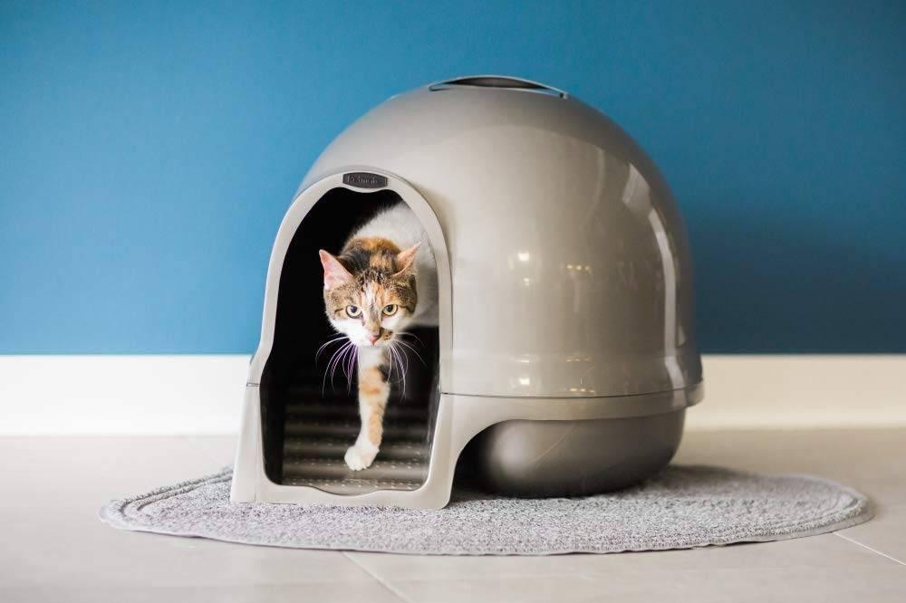 Dónde colocar el arenero de tu gato