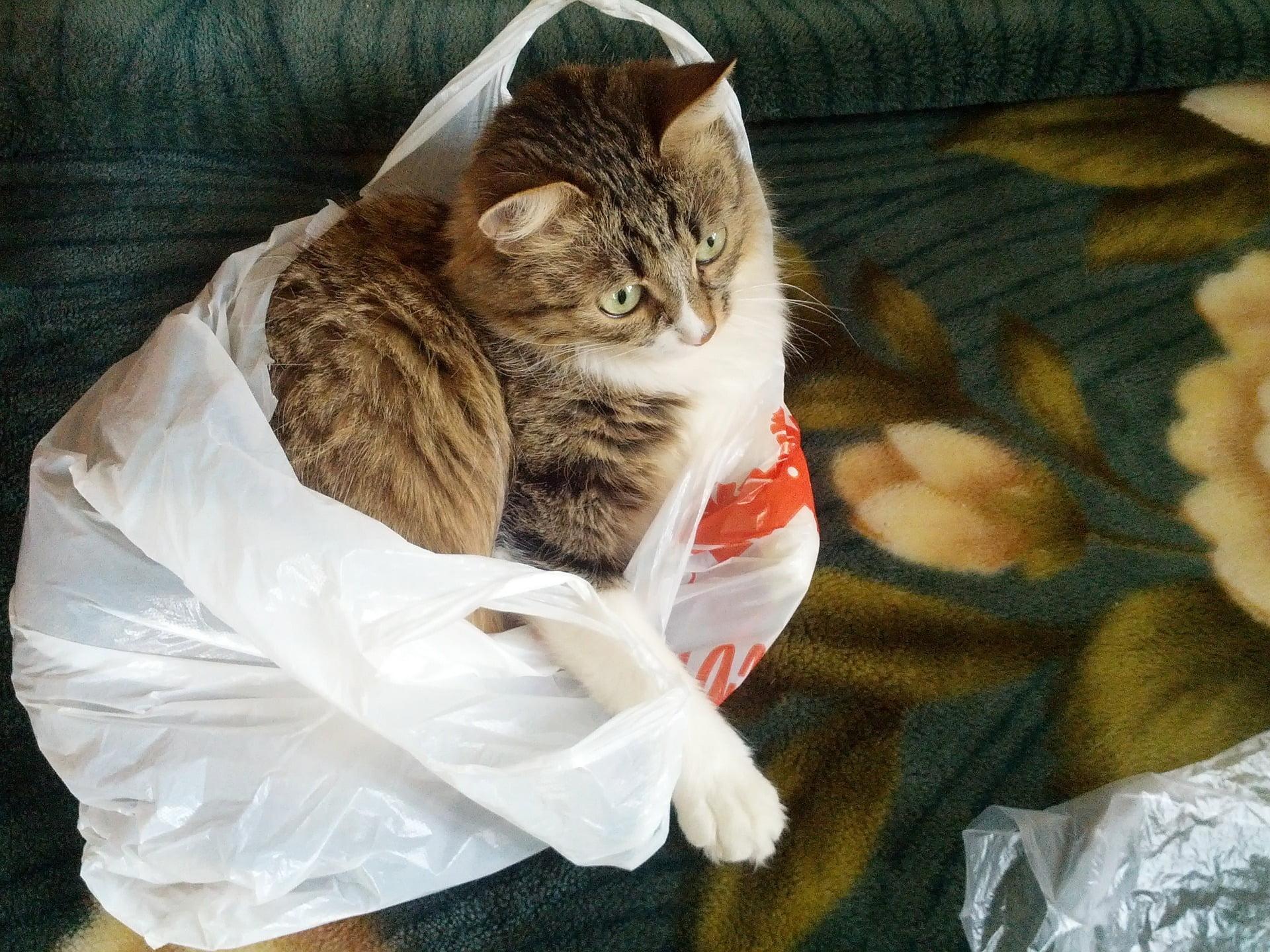 ¿Por qué mi gato come plástico?