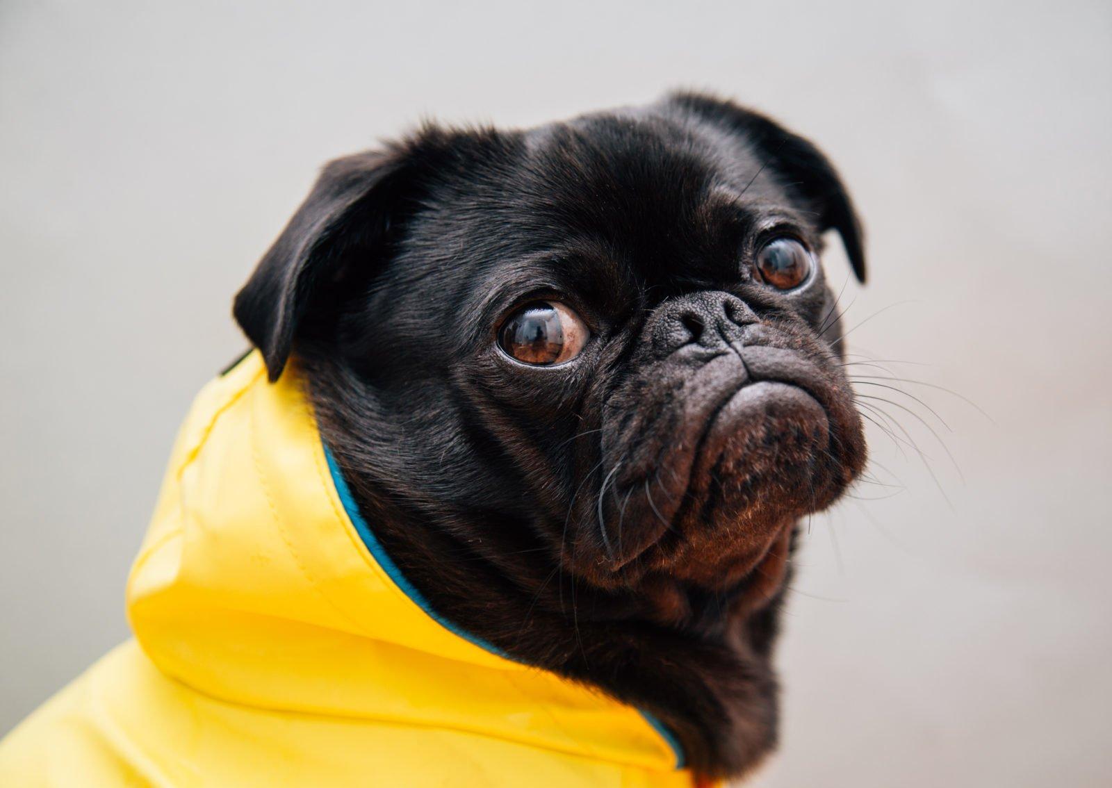 Impermeables para perros