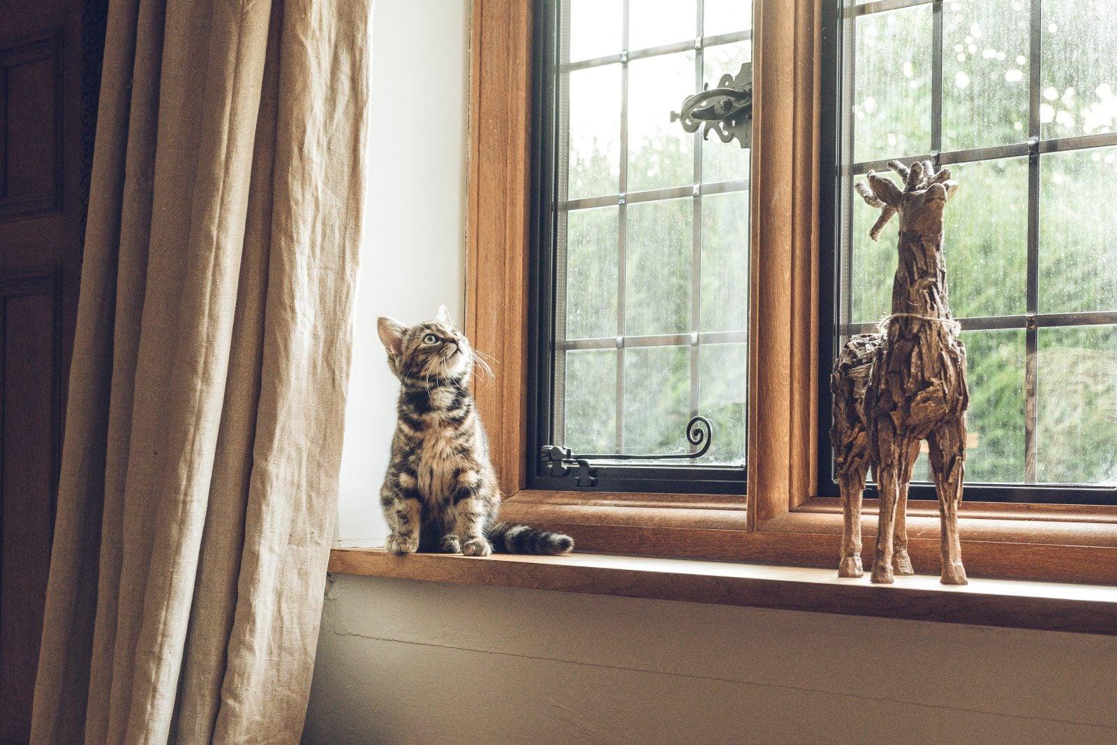 ¿Por qué los gatos hablan con los pájaros? Parlotean