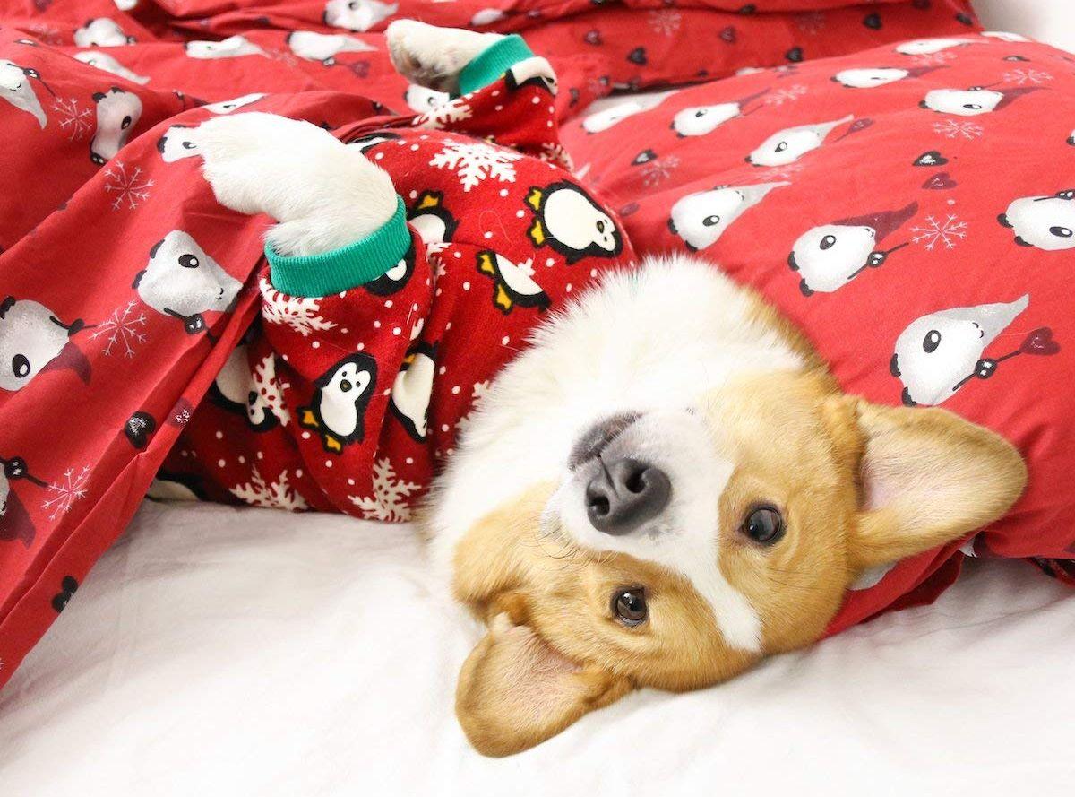 Mejor ropa de Navidad para perros