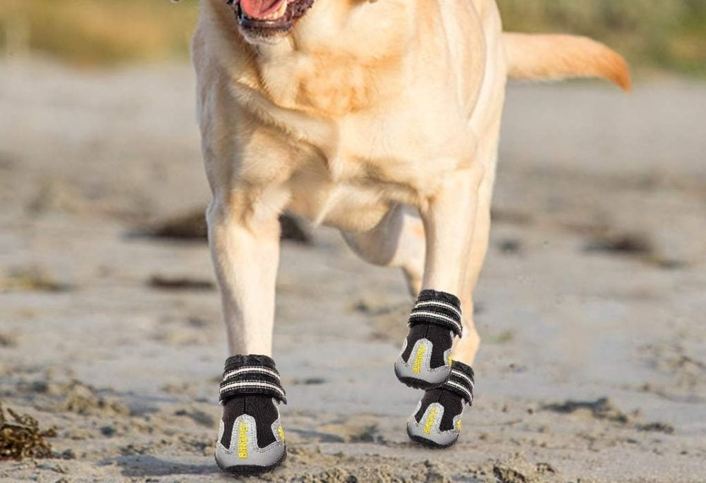 The Best Dog Boots