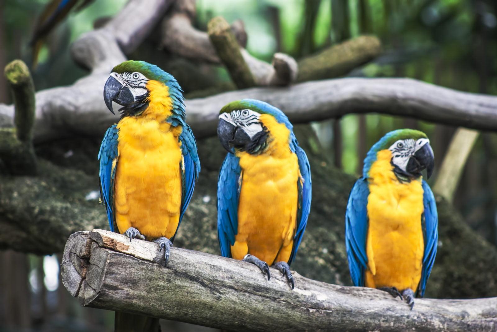 Mejores pájaros del mundo que hablan