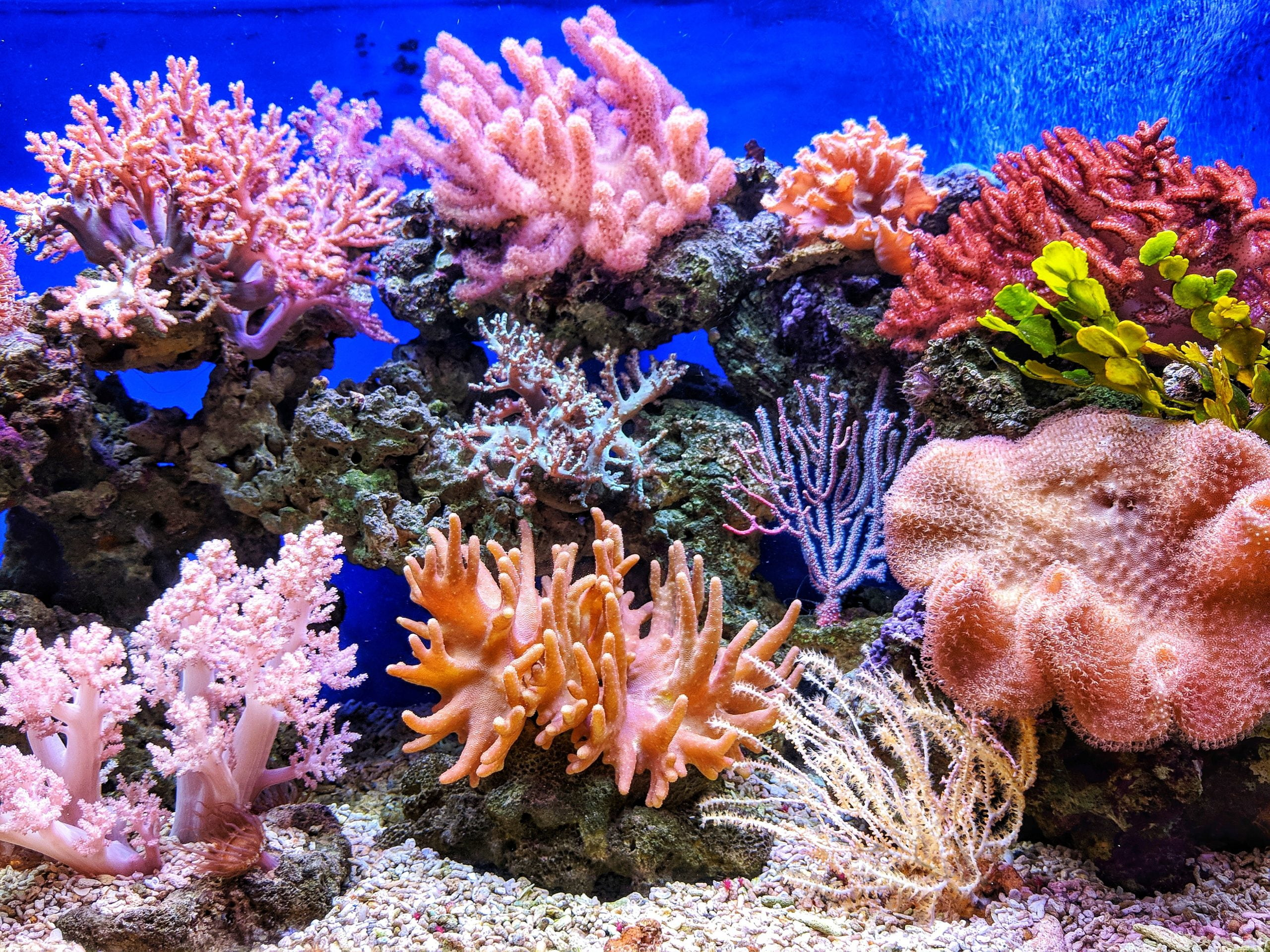 Los mejores mini acuarios marinos de arrecife [year] (análisis) 1