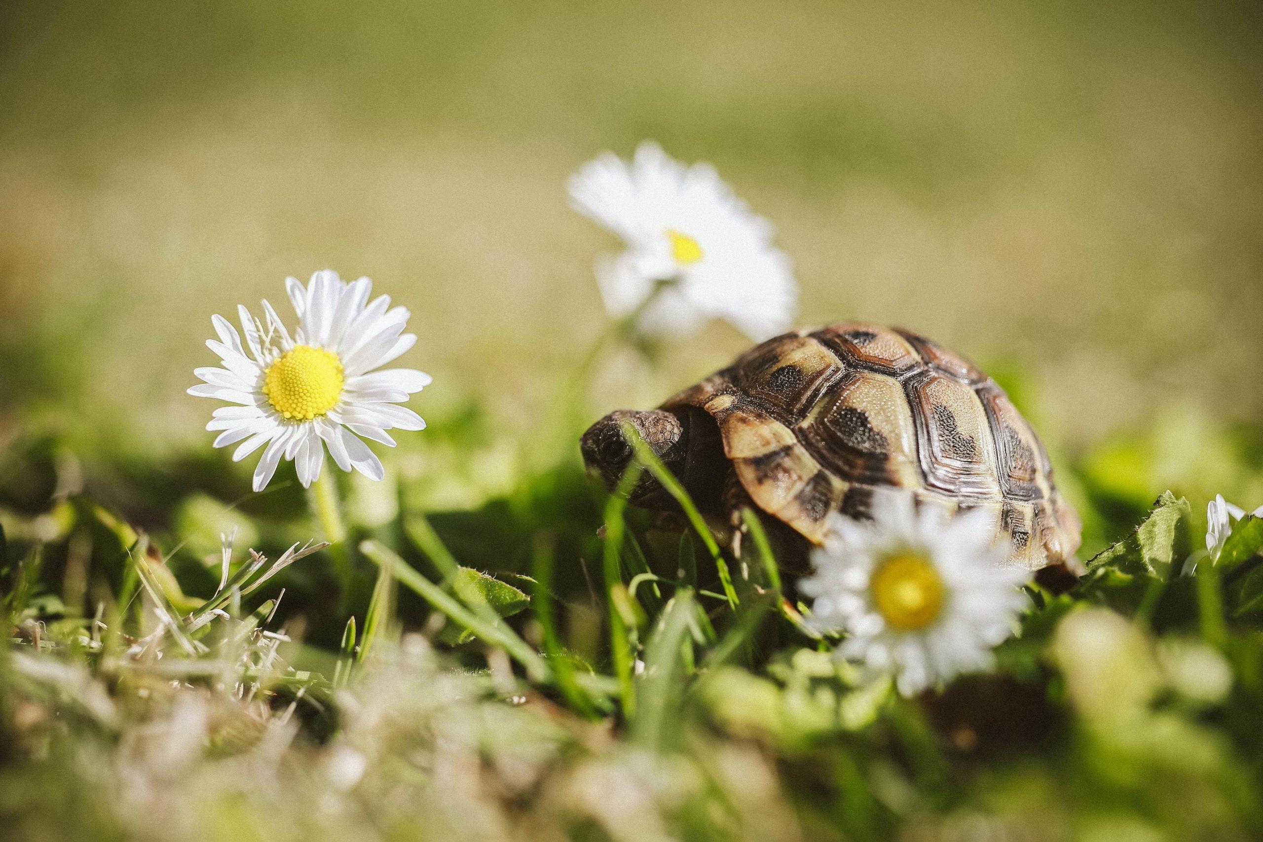 ¿Qué comen las tortugas mascota? Todo lo que necesitas saber 1