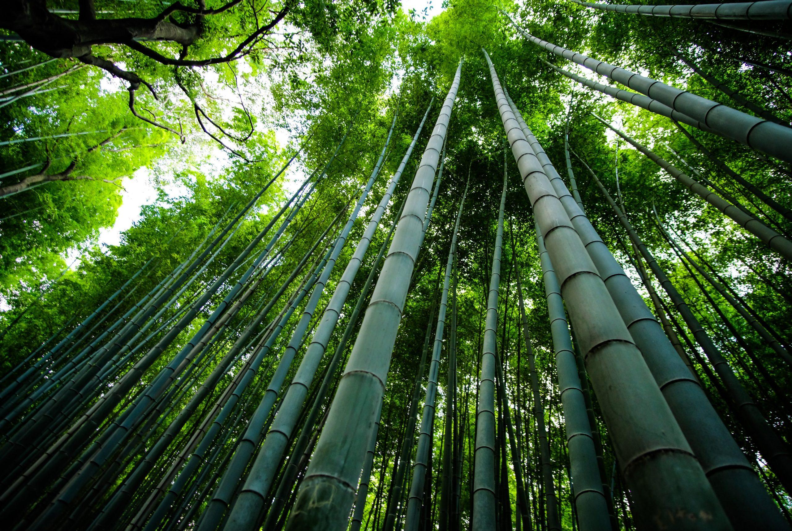 ¿Es el bambú venenoso para los perros? 1