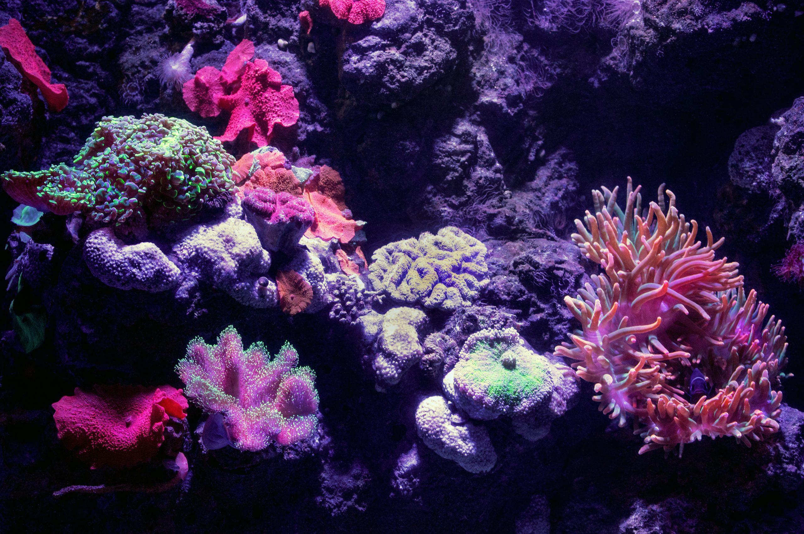 Mejores comedores de algas de agua dulce para tu acuario 1