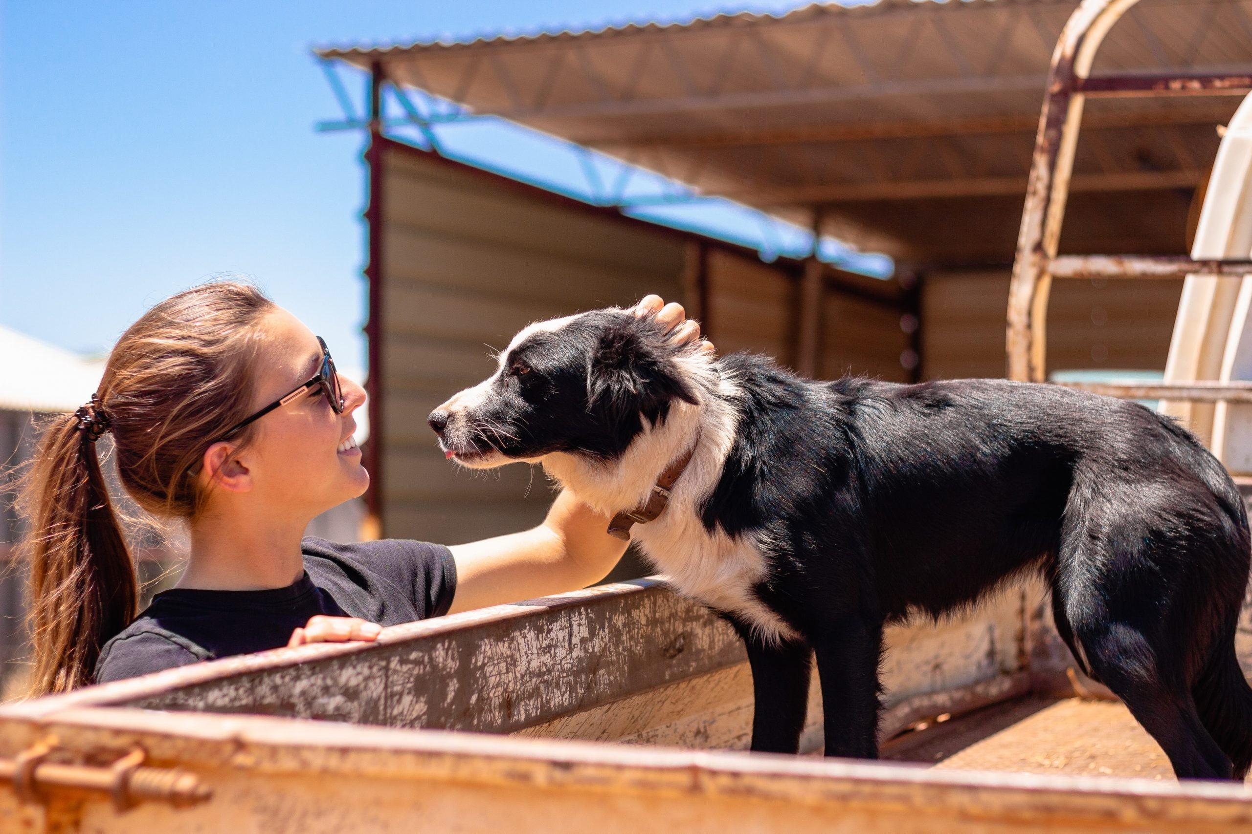 Las mordeduras de moscas en los perros: ¿Son tan malas como parecen?
