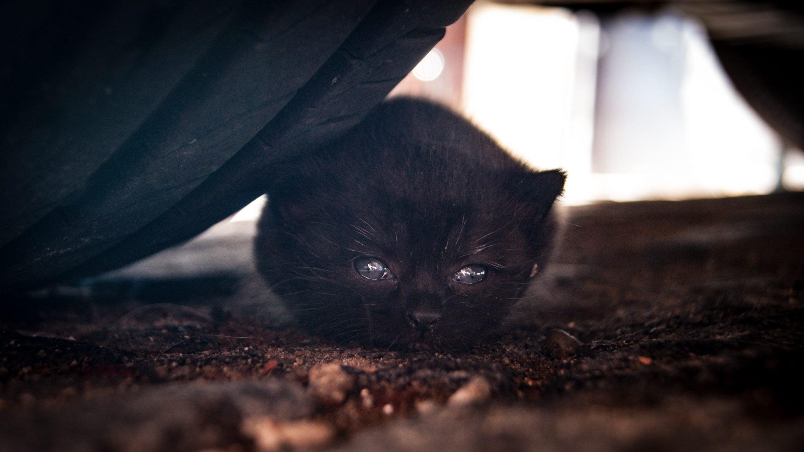 Domesticar gatitos salvajes: ¿Es posible? 1