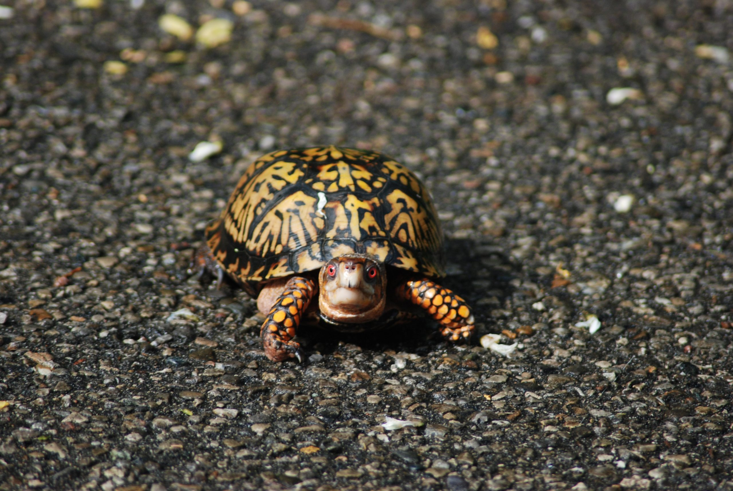 black and yellow turtle on ground