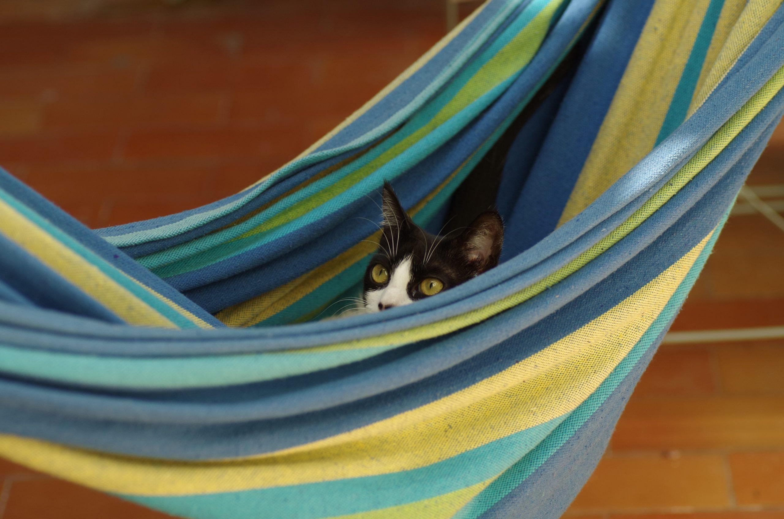 Mejores hamacas para gatos