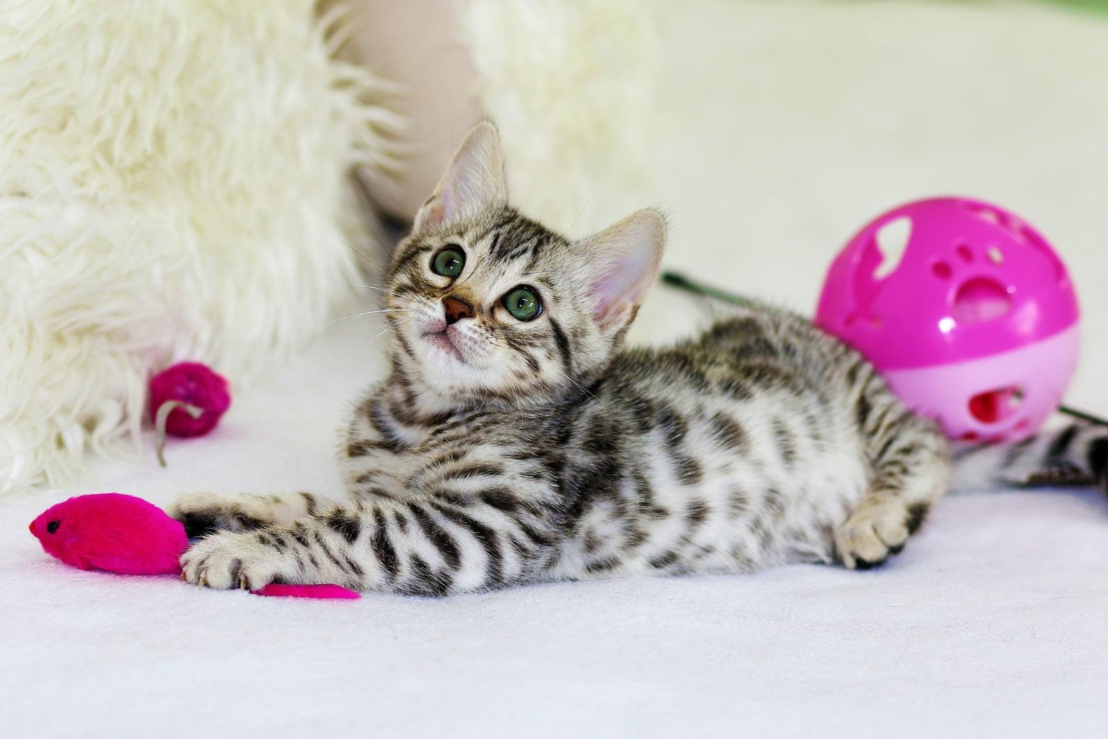 Mejores juguetes para gatitos que los mantendrán entretenidos