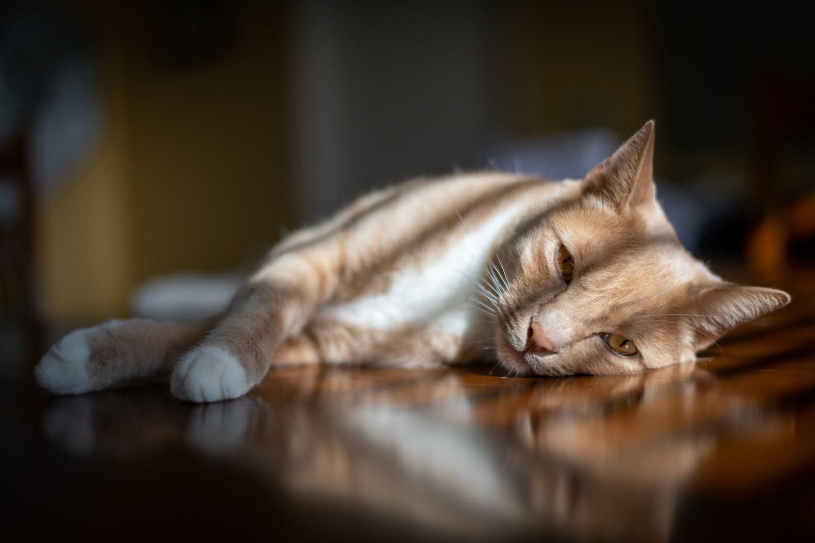Mejores productos calmantes y ansiolíticos para gatos