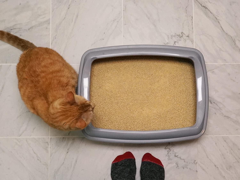 mejor arena para gatitos