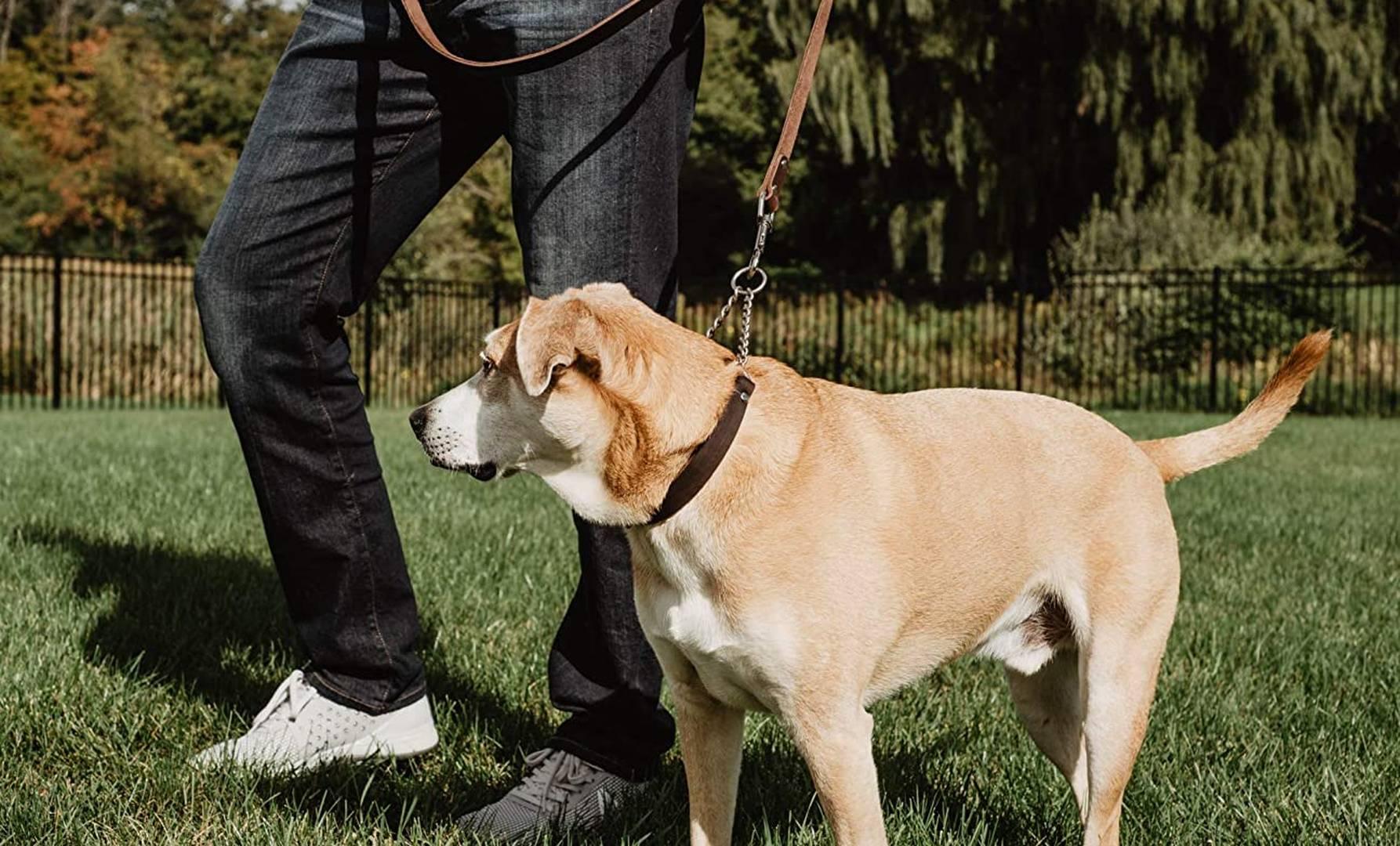 collares Martingale para perros