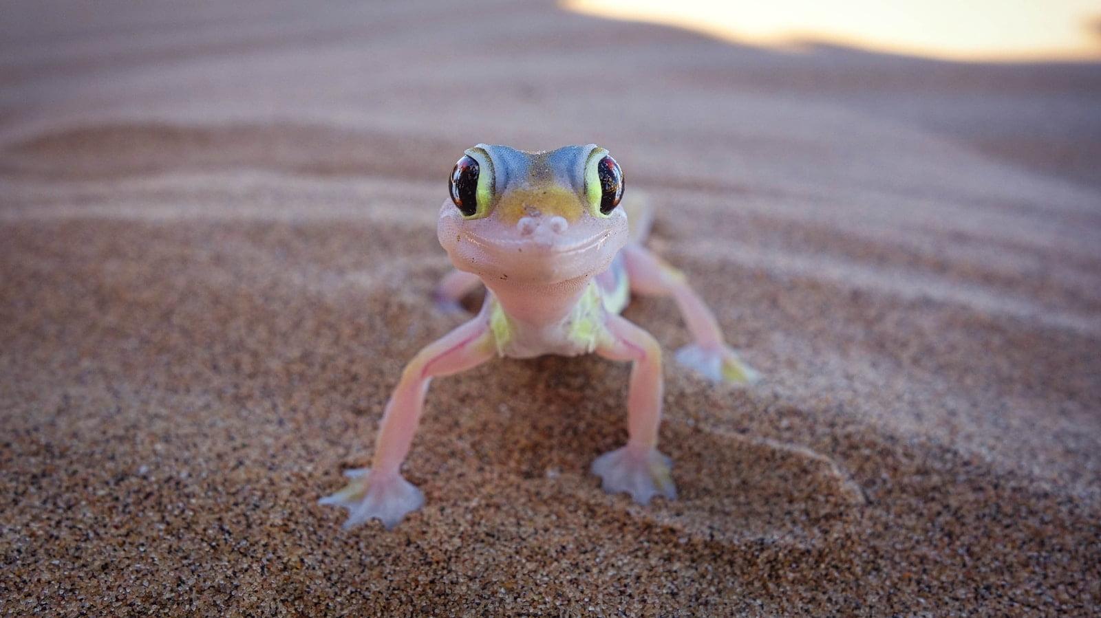 7 tipos de geckos que son buenas mascotas