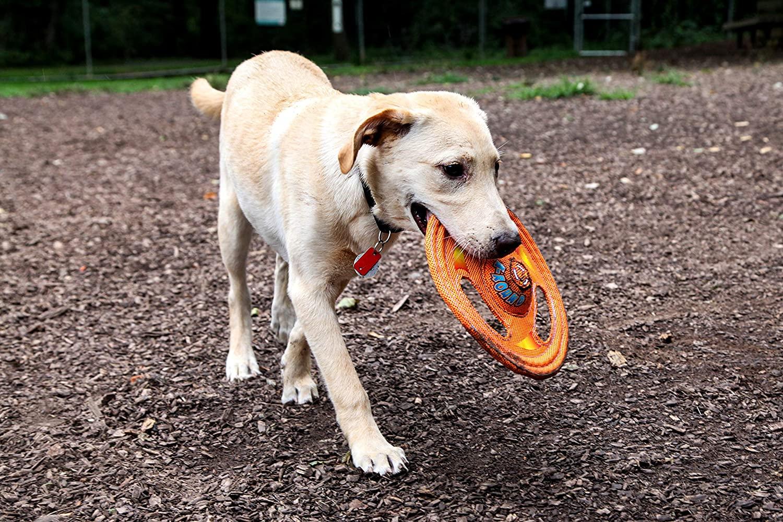 mejores frisbees para perros - Discos voladores para prros