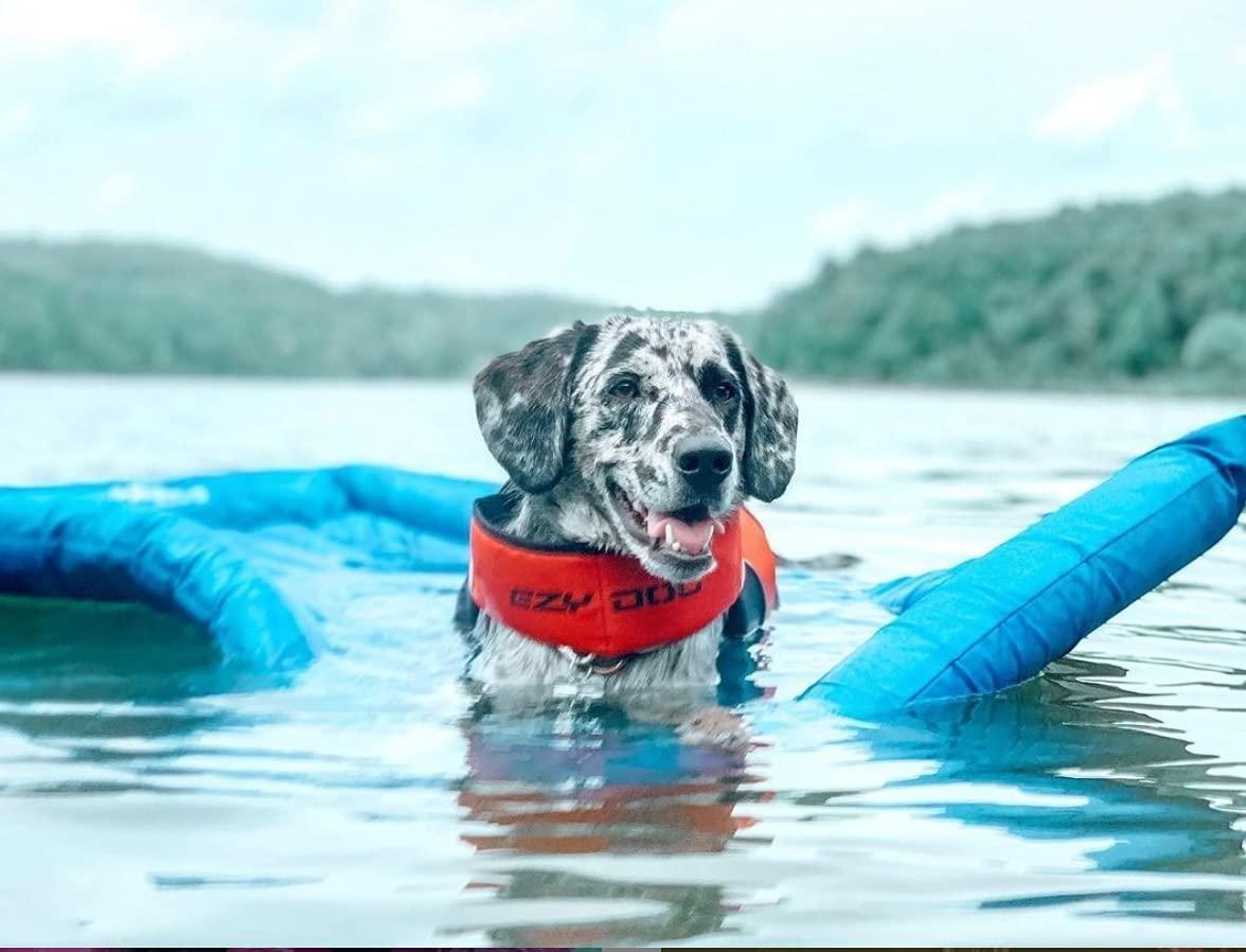 mejores flotadores para perros