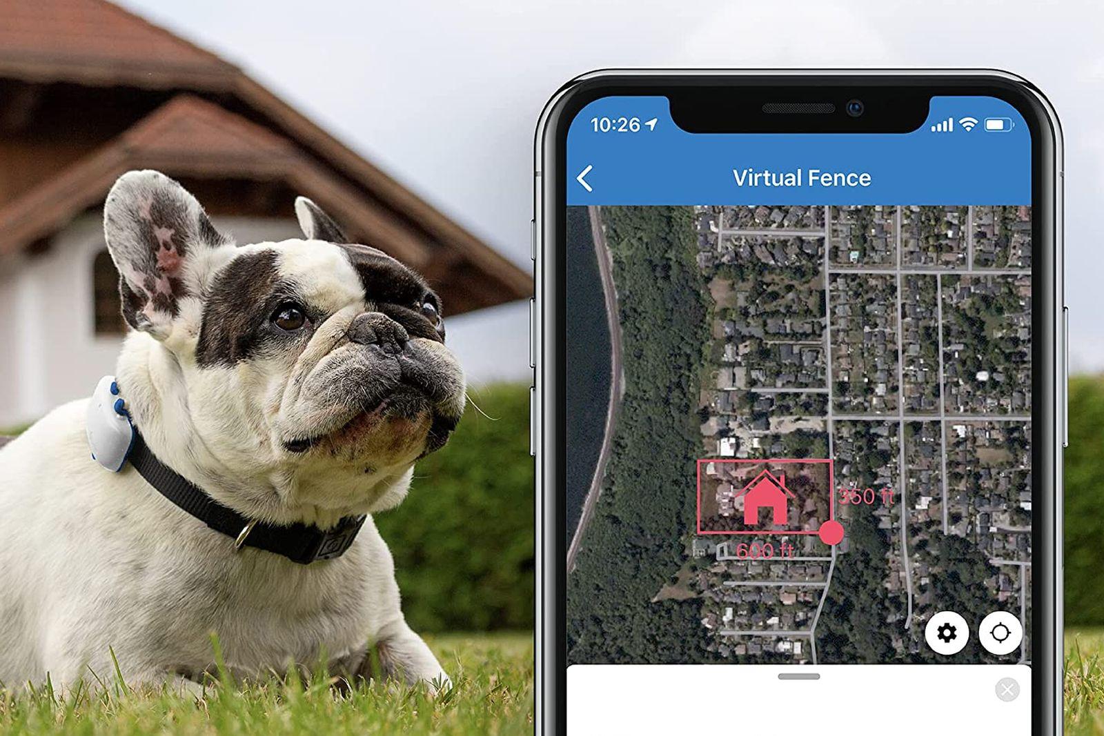 monitores de actividad para perros